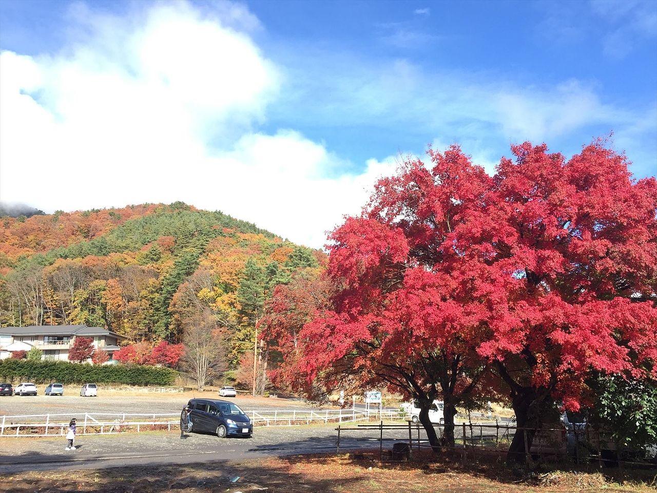 昨年は紅葉を見に川口湖に行きました