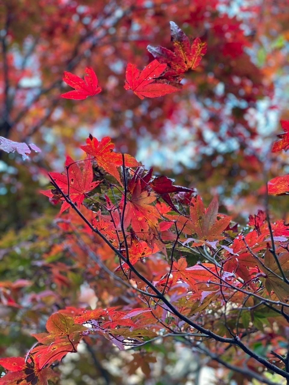 紅葉色に染まるカラーに活力が湧いてゆきます