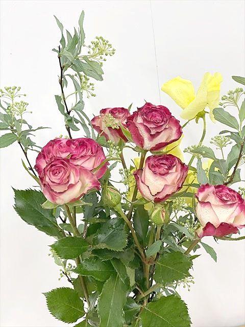今週の弊社のお花
