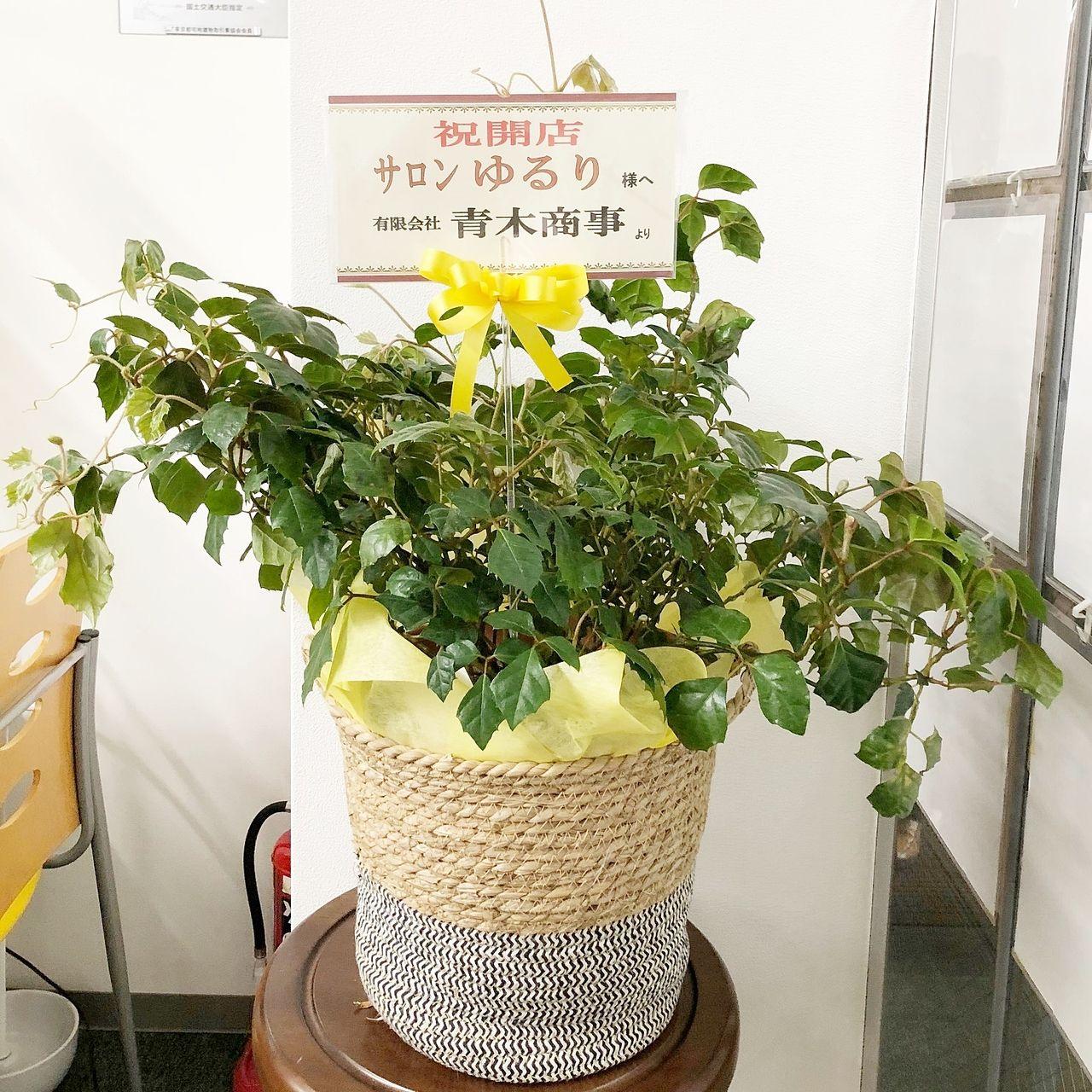 池袋の中條ビルに整体・温熱療法『サロンゆるり』さんがオープンされました。開店お祝いにお花を持参しました