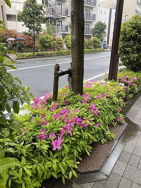 天候による植物の表情を楽しむ♬
