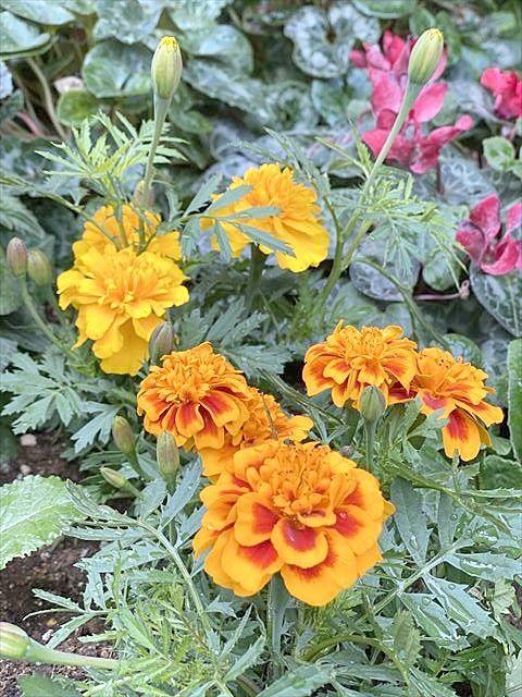 夏場の花壇メンテナンス