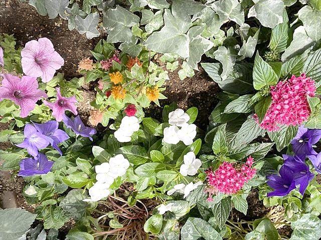 定期的に花壇のメンテナスを。
