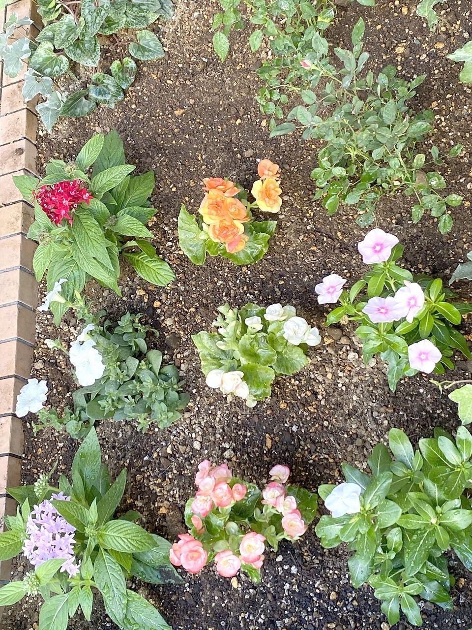 夏に強い花々達 花壇を夏色に